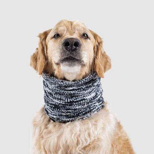 Hondensjaal van Canada Pooch