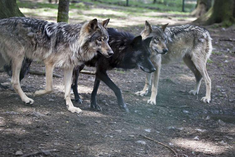 Dierenpark Forestia - 2 tickets voor dierenpark Forestia ...