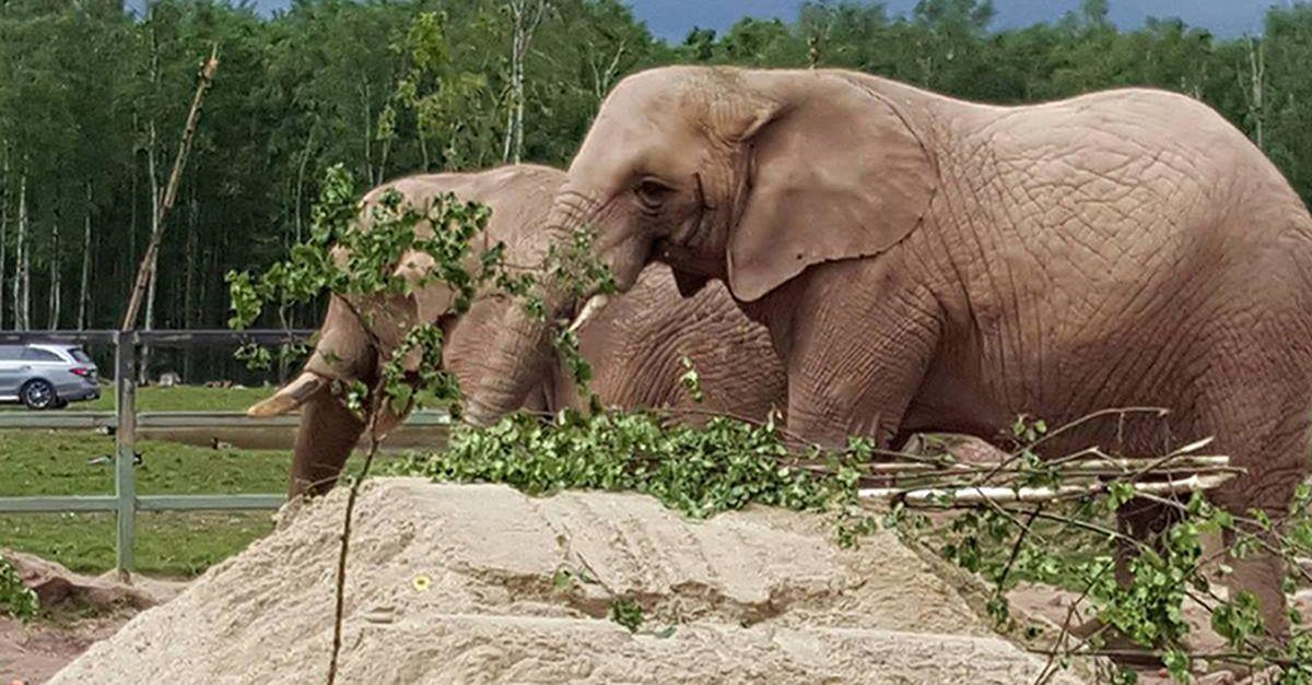 Safari au Monde Sauvage d'Aywaille (2 p.)