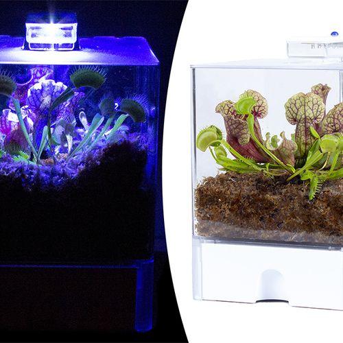 Vleesetende planten in een terrarium