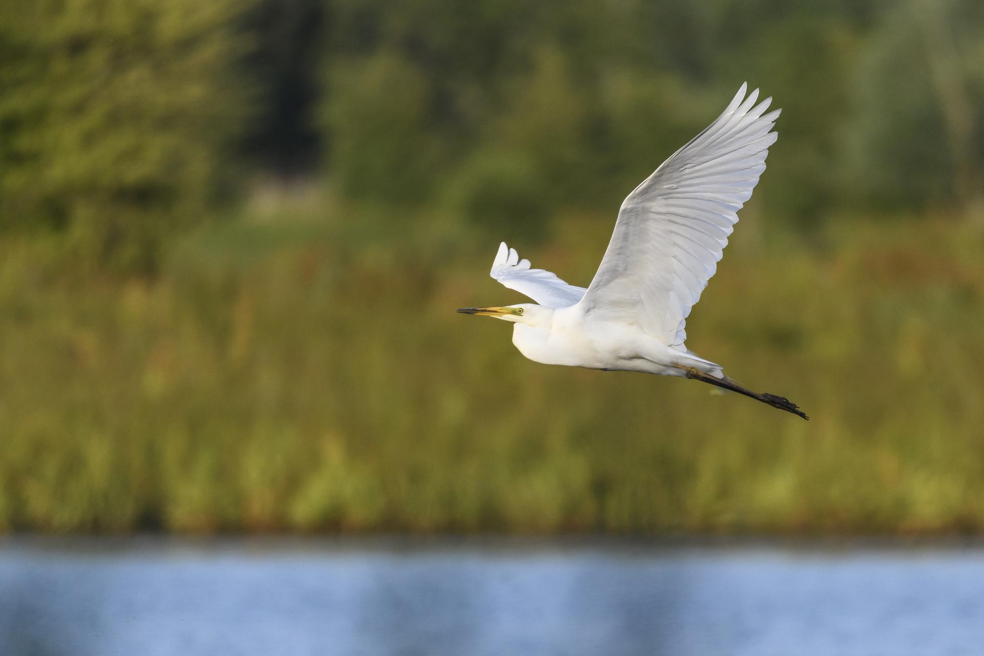 Dagje uit Flevoland natuur