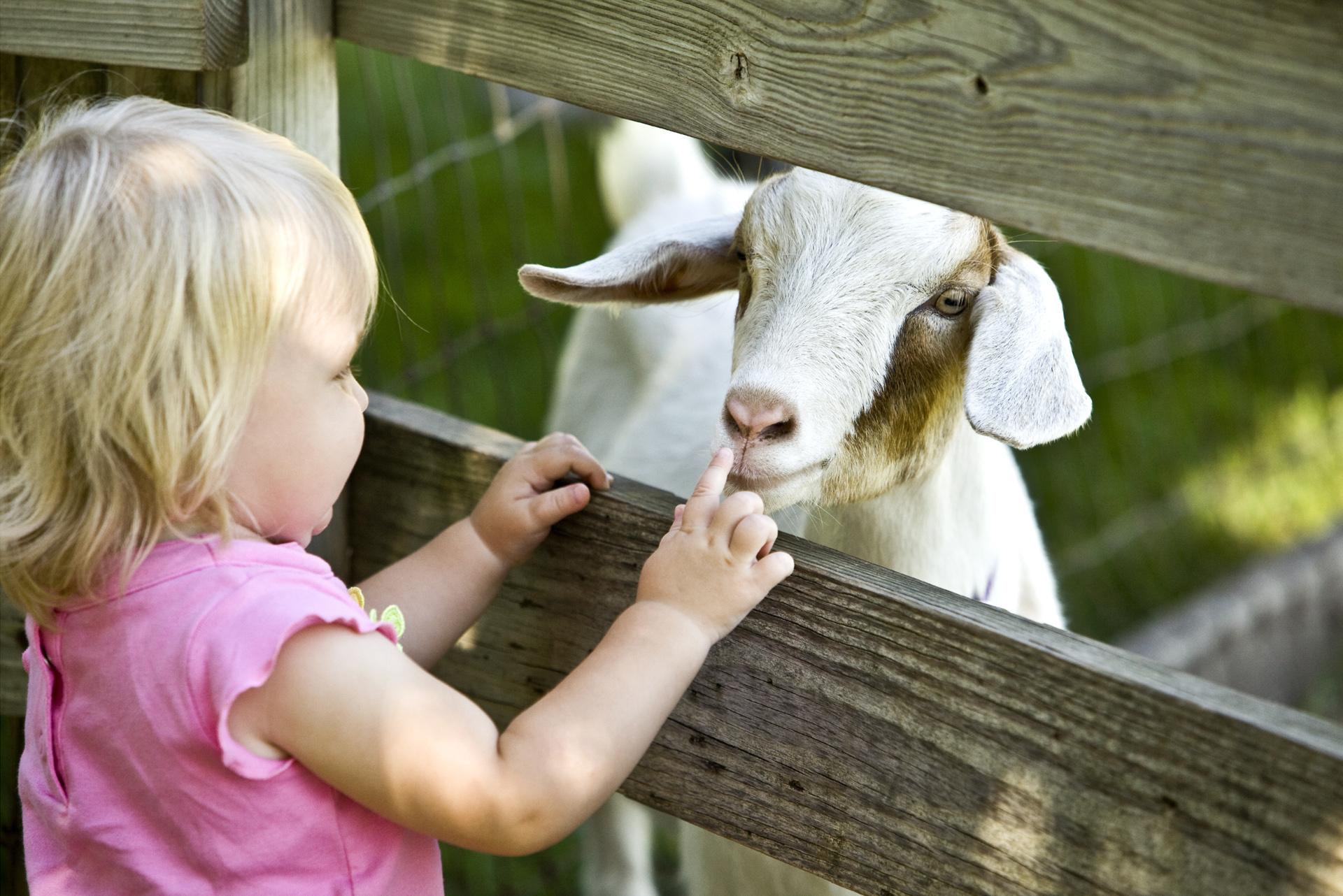 Dagje uit kinderboerderij