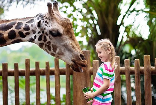 Giraf in GaiaZOO