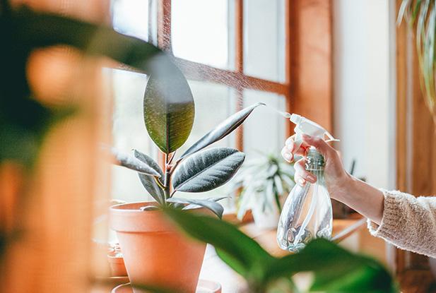 De juiste verzorging van een kamerplant