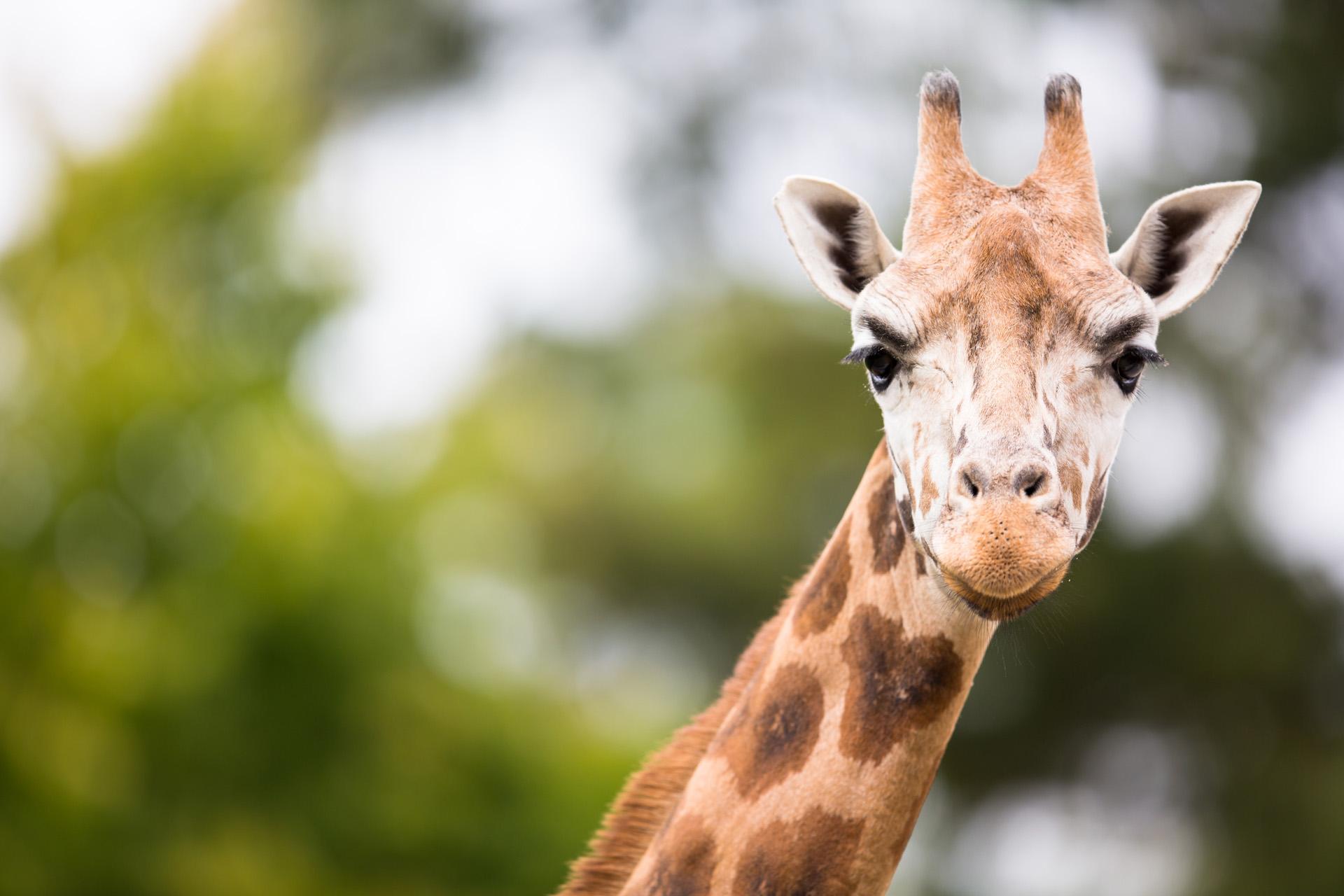 Nederland dagje uit dierentuin