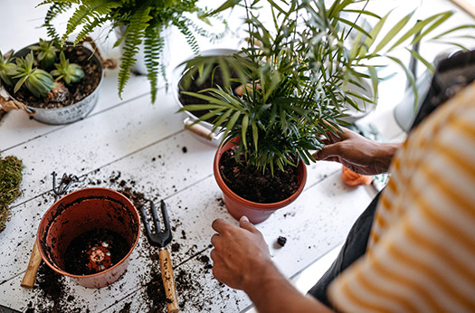 Planten - SlaJeSlag