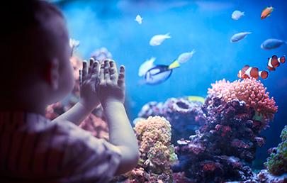 Sea Life Scheveningen - VakantieVeilingen