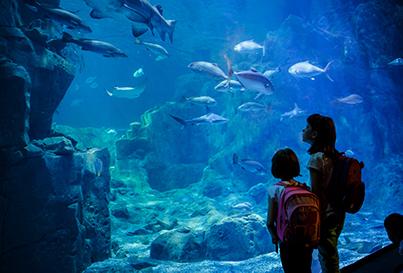 Sea Life korting - VakantieVeilingen