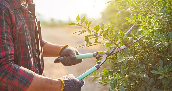 Tuin lenteklaar maken: snoeien van planten