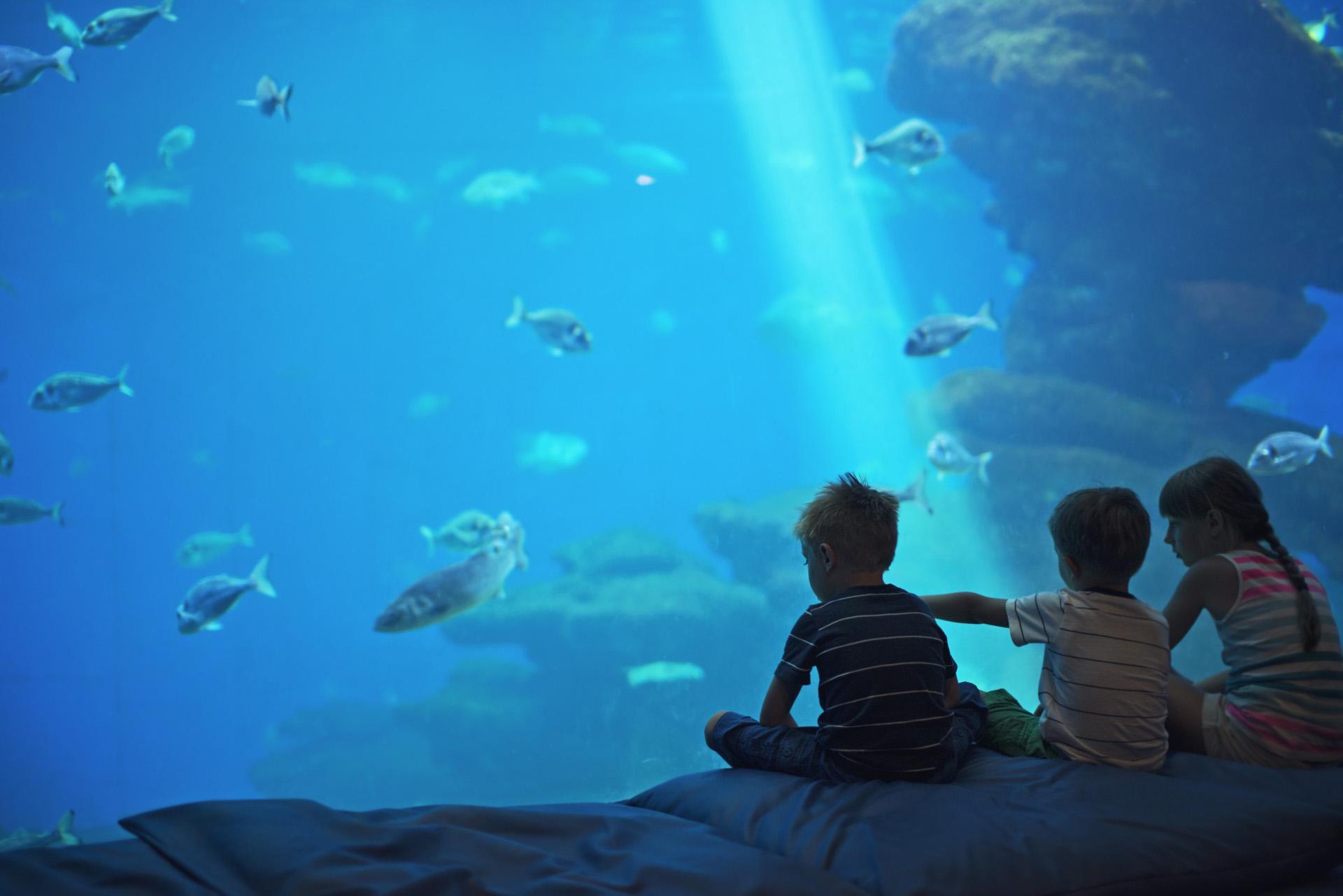 Uitjes herfstvakantie aquarium