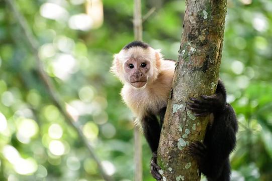 Gaiazoo dierentuin vakantieveilingen