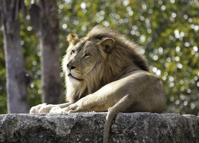 Wildlands Emmen dierentuin VakantieVeilingen