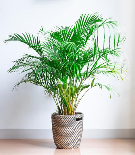 kamerplanten actie korting aanbieding bloemen vakantieveilingen