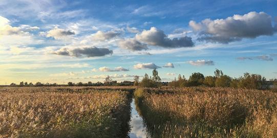 weekendje-weg-Nederland-natuurgebied-vakantieveilingen