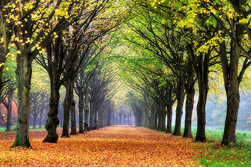 Dagje uit in Amsterdam: het Amsterdamse bos