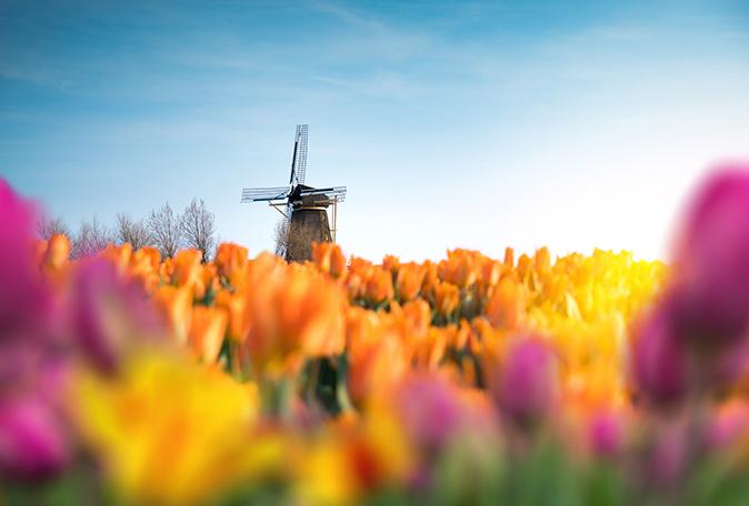 Vakantie in Nederland: bezoek de Bollenstreek